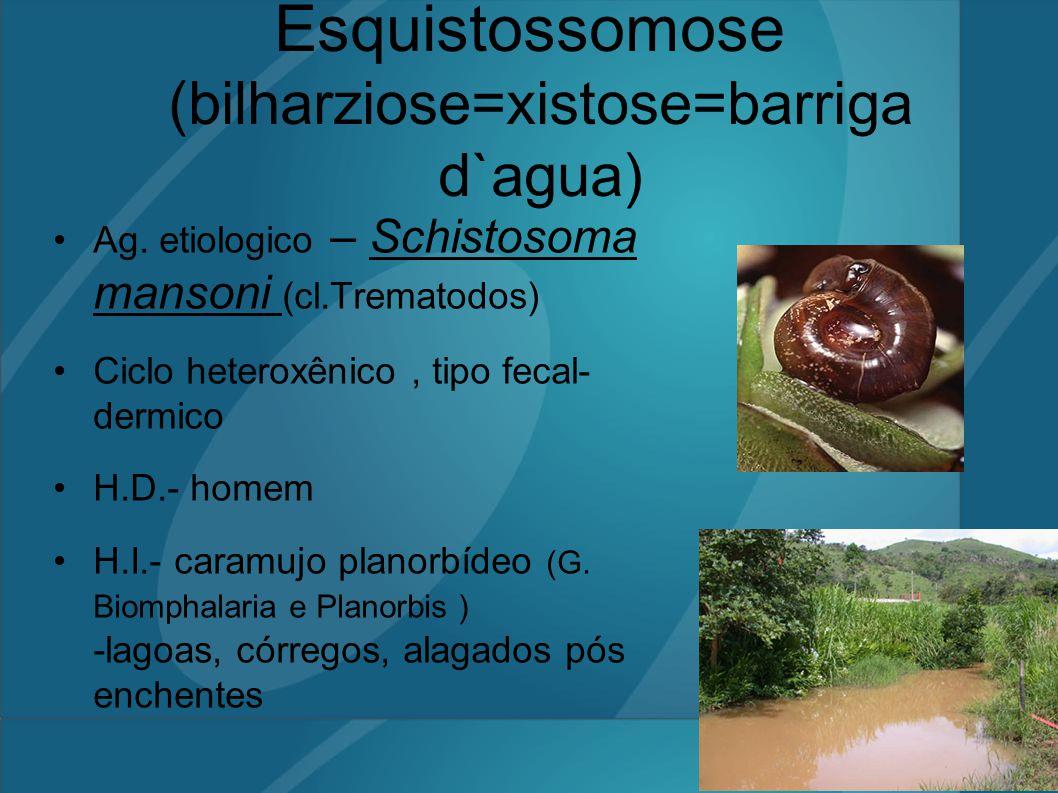 Esquistossomose (bilharziose=xistose=barriga d`agua) Ag. etiologico – Schistosoma mansoni (cl.Trematodos) Ciclo heteroxênico, tipo fecal- dermico H.