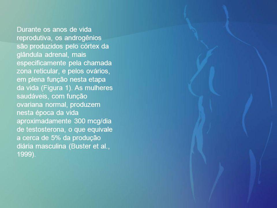 Durante os anos de vida reprodutiva, os androgênios são produzidos pelo córtex da glândula adrenal, mais especificamente pela chamada zona reticular,