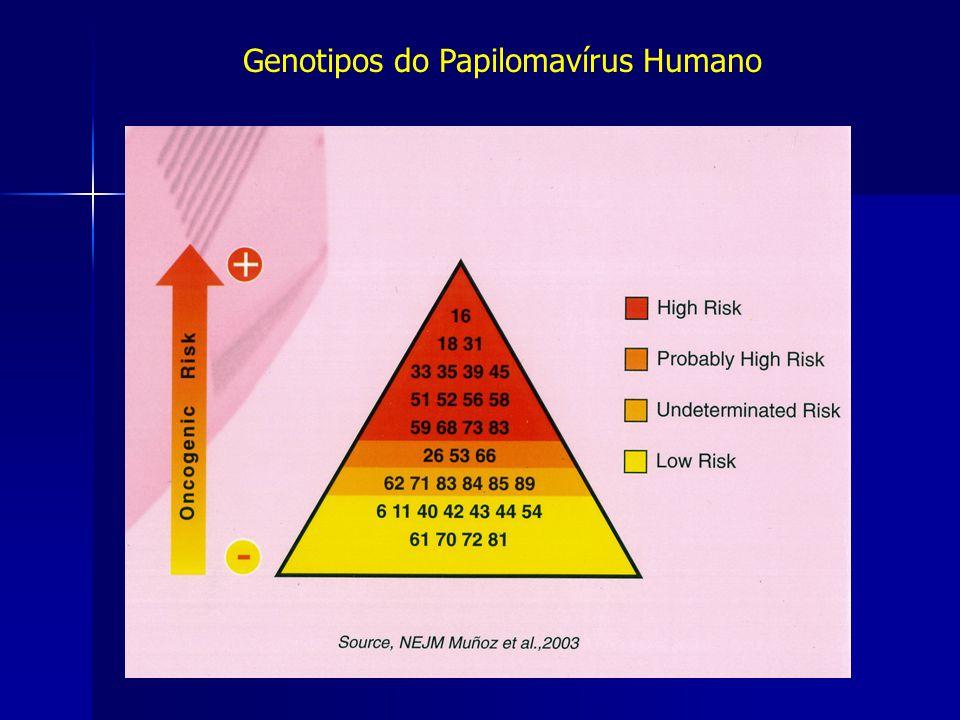 História Natural do Cancro Colo Útero Papilomavírus Humano Infecção persistente por tipos oncogénicos Factor causal indispensável para o desenvolvimento de cancro cervical 99,7% dos Cancros Cervicais associam-se a HPV oncogénicos Eurogin 2006