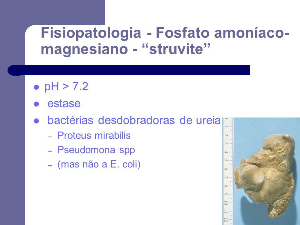 Fisiopatologia - Fosfato amoníaco- magnesiano - struvite pH > 7.2 estase bactérias desdobradoras de ureia – Proteus mirabilis – Pseudomona spp – (mas não a E.