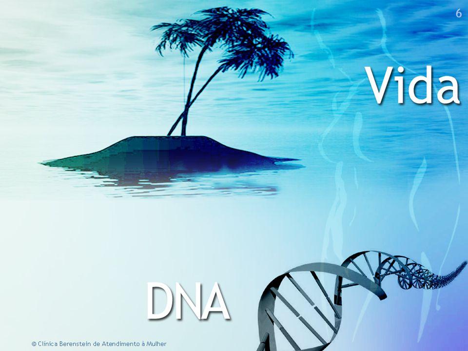 12 © Clínica Berenstein de Atendimento à Mulher  No SNC, a subjetividade imaterial transforma-se em química orgânica.