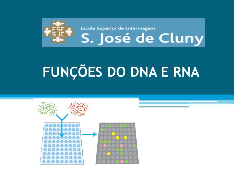 FUNÇÕES DO DNA E RNA