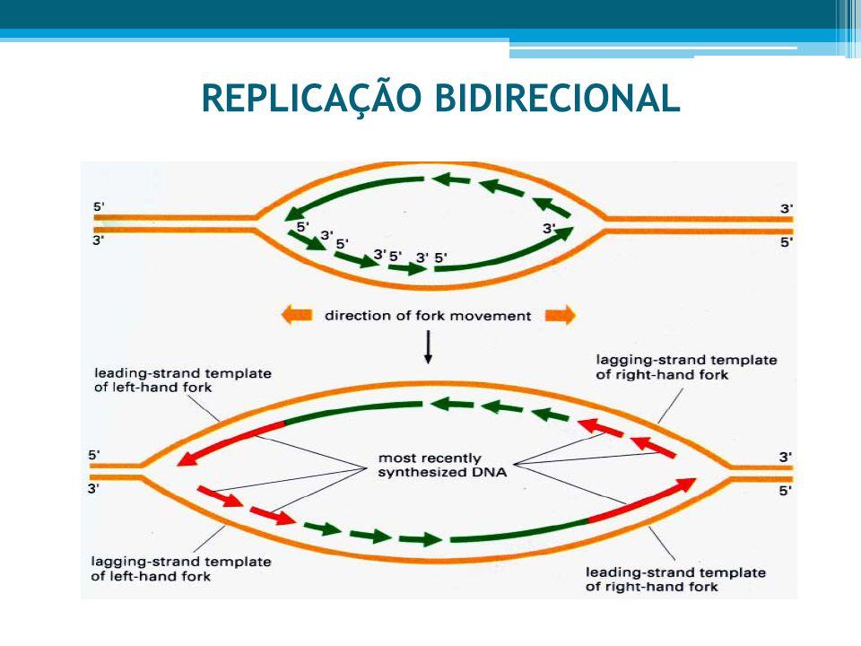 REPLICAÇÃO BIDIRECIONAL