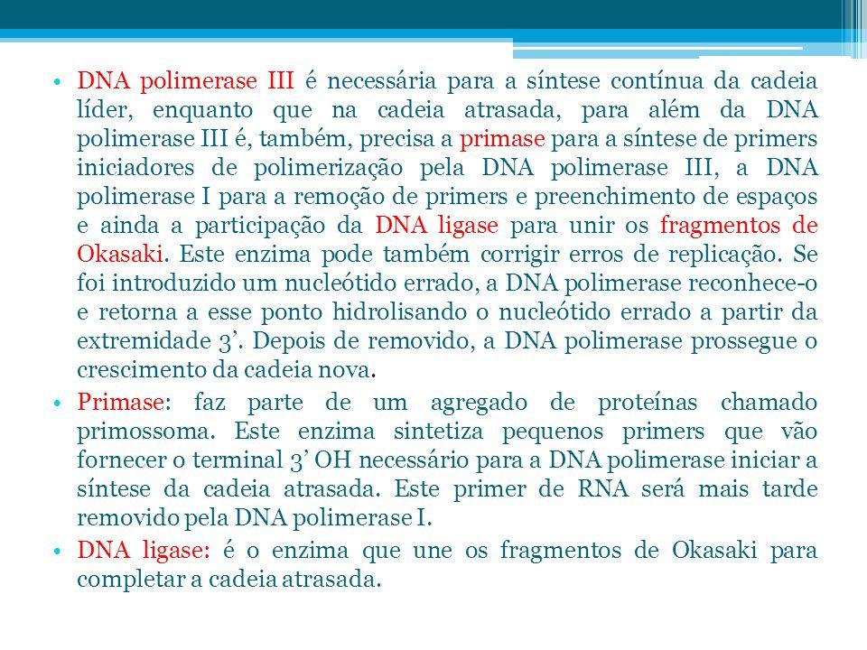 DNA polimerase III é necessária para a síntese contínua da cadeia líder, enquanto que na cadeia atrasada, para além da DNA polimerase III é, também, precisa a primase para a síntese de primers iniciadores de polimerização pela DNA polimerase III, a DNA polimerase I para a remoção de primers e preenchimento de espaços e ainda a participação da DNA ligase para unir os fragmentos de Okasaki.