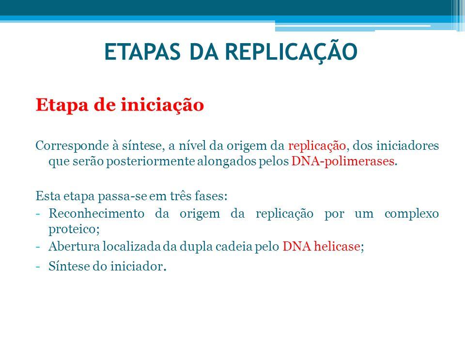 ETAPAS DA REPLICAÇÃO Etapa de iniciação Corresponde à síntese, a nível da origem da replicação, dos iniciadores que serão posteriormente alongados pel