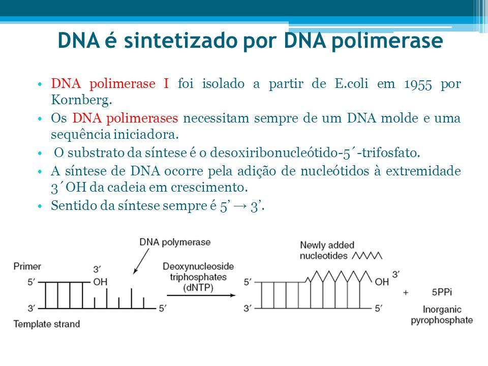 DNA é sintetizado por DNA polimerase DNA polimerase I foi isolado a partir de E.coli em 1955 por Kornberg. Os DNA polimerases necessitam sempre de um