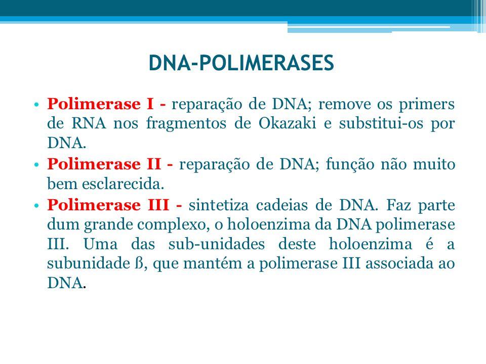 DNA-POLIMERASES Polimerase I - reparação de DNA; remove os primers de RNA nos fragmentos de Okazaki e substitui-os por DNA. Polimerase II - reparação