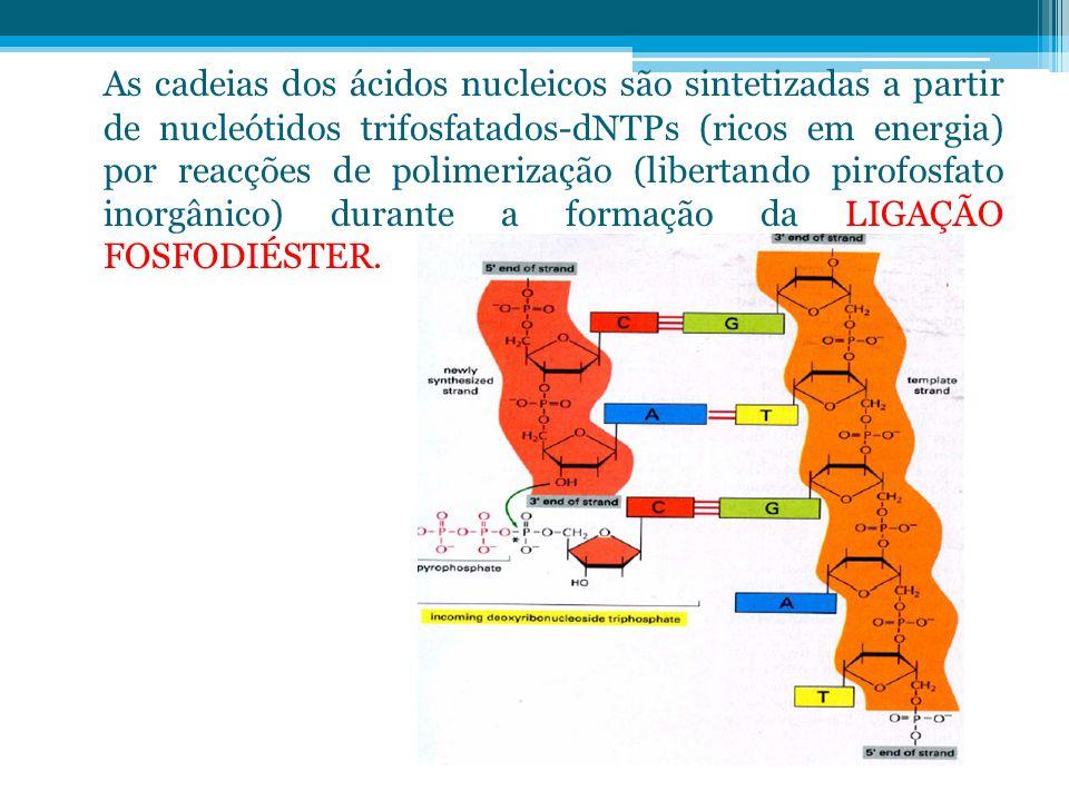As cadeias dos ácidos nucleicos são sintetizadas a partir de nucleótidos trifosfatados-dNTPs (ricos em energia) por reacções de polimerização (libertando pirofosfato inorgânico) durante a formação da LIGAÇÃO FOSFODIÉSTER.