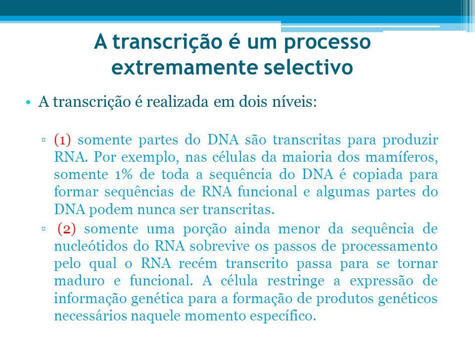 A transcrição é um processo extremamente selectivo A transcrição é realizada em dois níveis: ▫(1) somente partes do DNA são transcritas para produzir RNA.