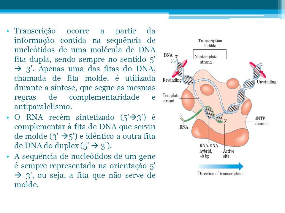 Transcrição ocorre a partir da informação contida na sequência de nucleótidos de uma molécula de DNA fita dupla, sendo sempre no sentido 5'  3'. Apen