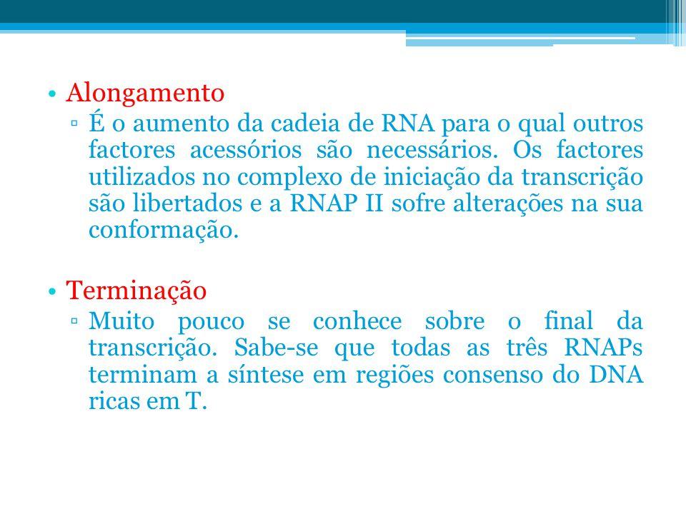 Alongamento ▫É o aumento da cadeia de RNA para o qual outros factores acessórios são necessários. Os factores utilizados no complexo de iniciação da t