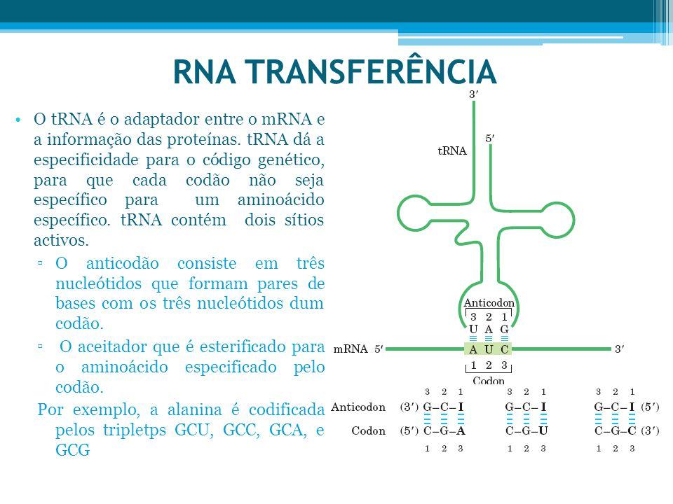 RNA TRANSFERÊNCIA O tRNA é o adaptador entre o mRNA e a informação das proteínas. tRNA dá a especificidade para o código genético, para que cada codão