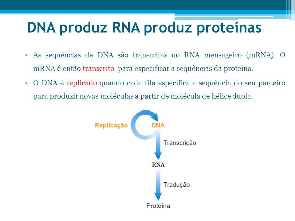 DNA produz RNA produz proteínas As sequências de DNA são transcritas no RNA mensageiro (mRNA).
