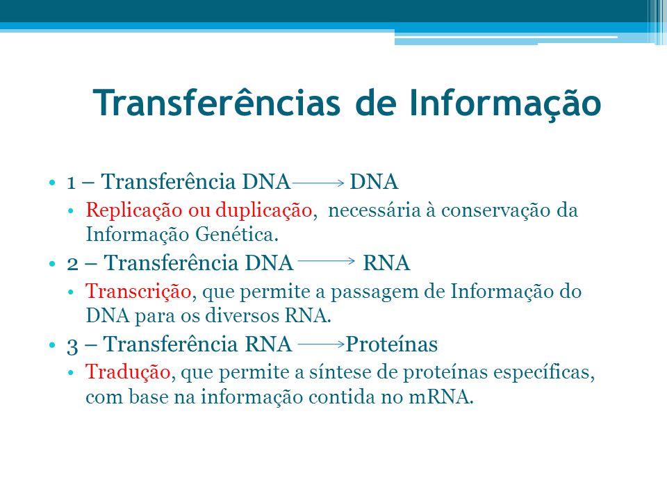 Transferências de Informação 1 – Transferência DNA DNA Replicação ou duplicação, necessária à conservação da Informação Genética. 2 – Transferência DN