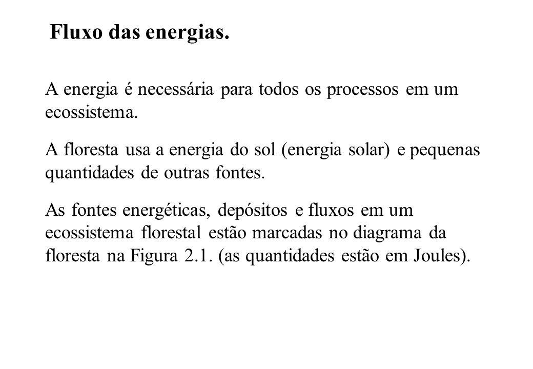 Fluxo das energias. A energia é necessária para todos os processos em um ecossistema. A floresta usa a energia do sol (energia solar) e pequenas quant