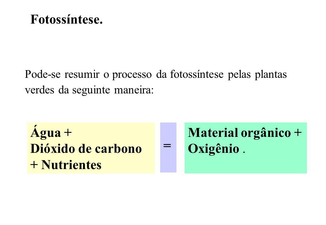 Fotossíntese. Pode-se resumir o processo da fotossíntese pelas plantas verdes da seguinte maneira: Água + Dióxido de carbono + Nutrientes Material org