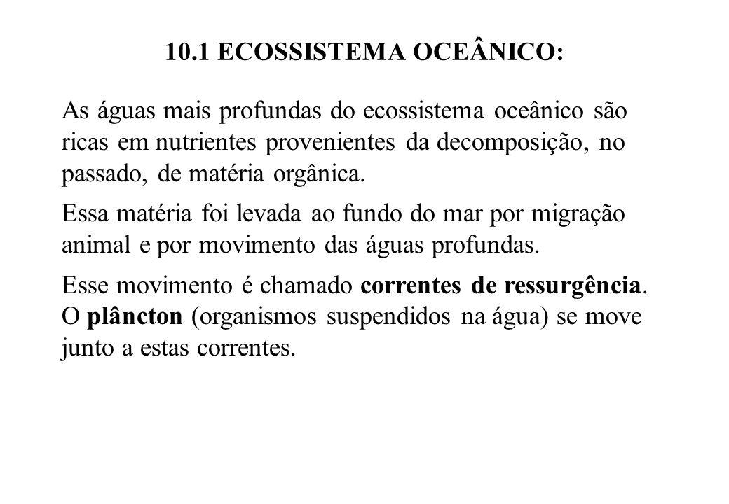 10.1 ECOSSISTEMA OCEÂNICO: As águas mais profundas do ecossistema oceânico são ricas em nutrientes provenientes da decomposição, no passado, de matéri