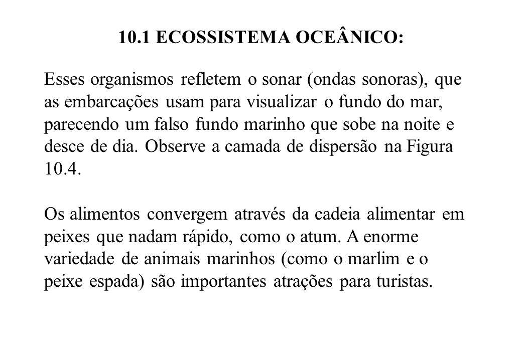 10.1 ECOSSISTEMA OCEÂNICO: Esses organismos refletem o sonar (ondas sonoras), que as embarcações usam para visualizar o fundo do mar, parecendo um fal