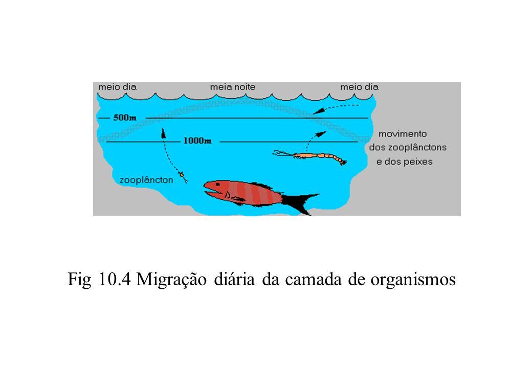 Fig 10.4 Migração diária da camada de organismos