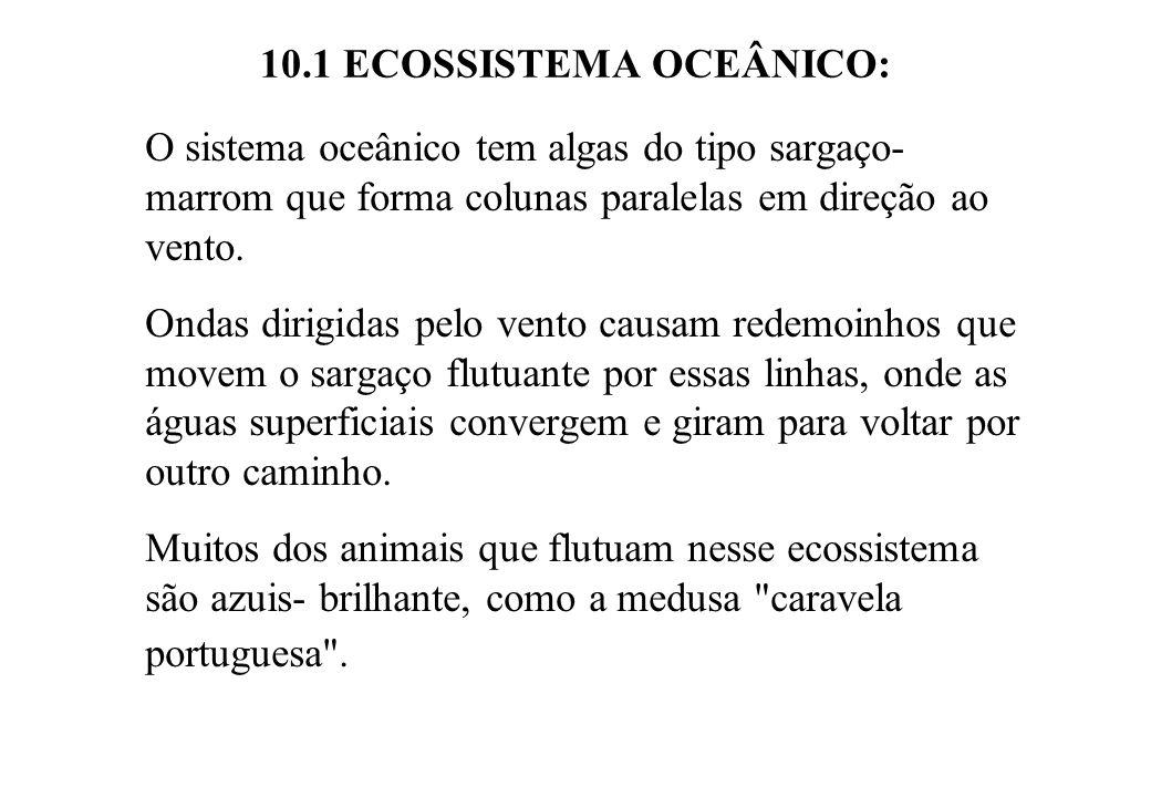 10.1 ECOSSISTEMA OCEÂNICO: O sistema oceânico tem algas do tipo sargaço- marrom que forma colunas paralelas em direção ao vento. Ondas dirigidas pelo