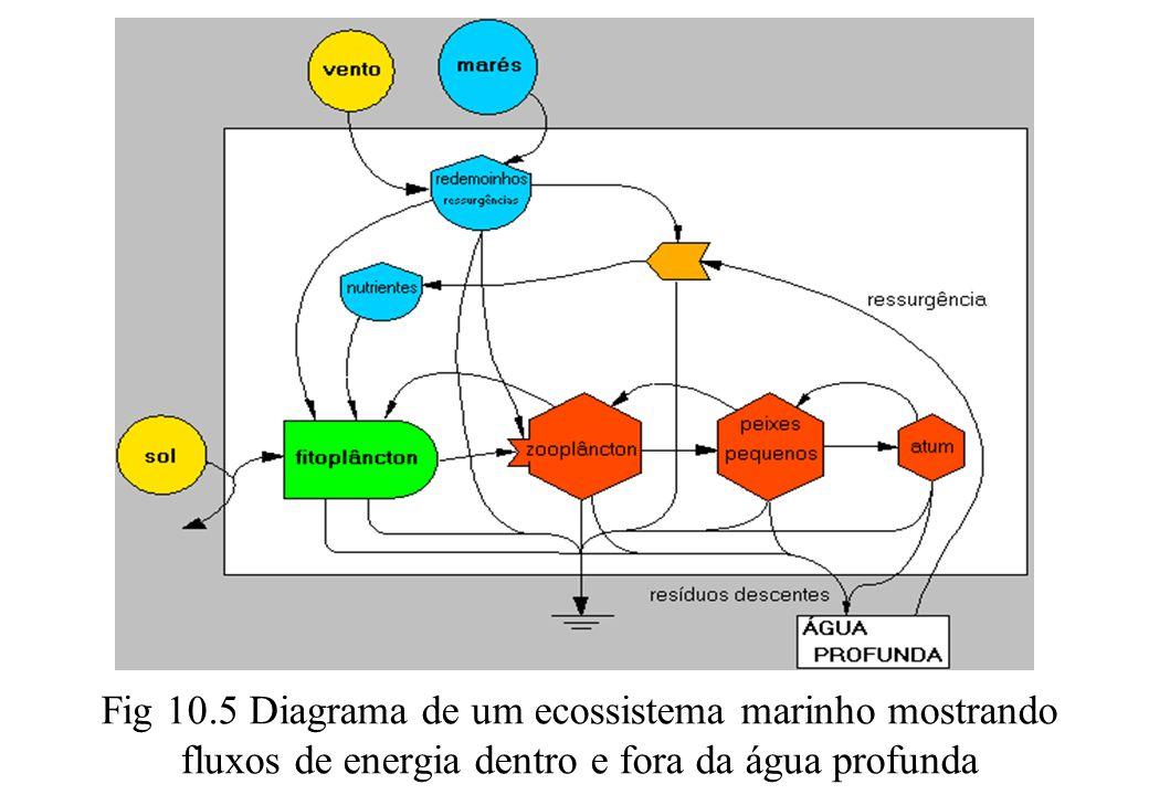 Fig 10.5 Diagrama de um ecossistema marinho mostrando fluxos de energia dentro e fora da água profunda