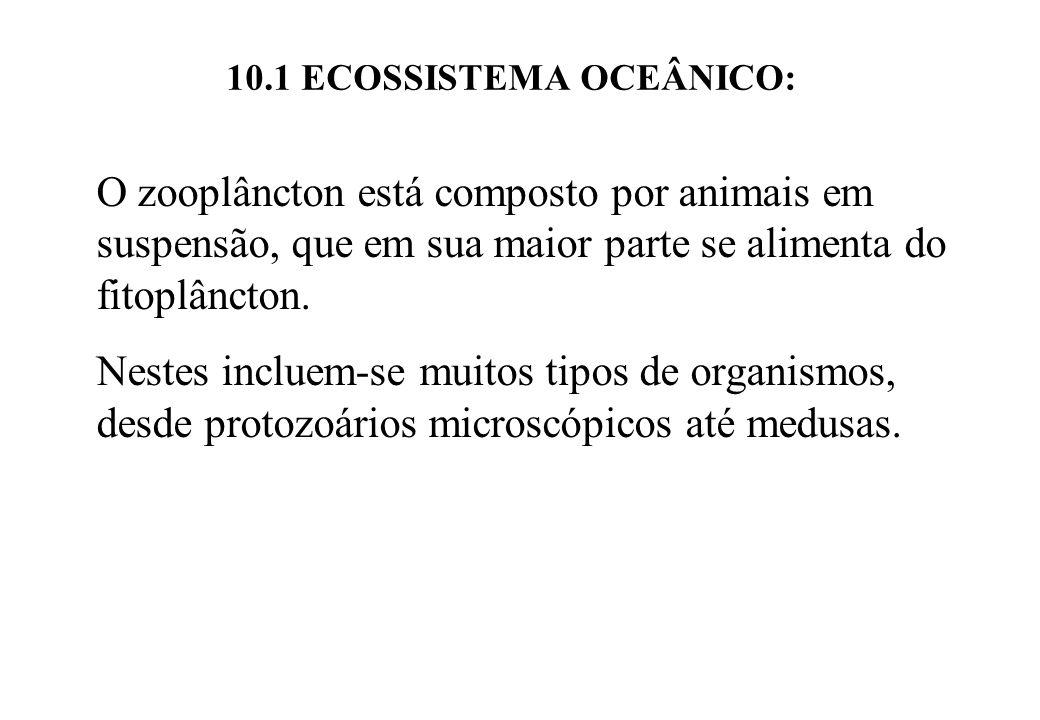 10.1 ECOSSISTEMA OCEÂNICO: O zooplâncton está composto por animais em suspensão, que em sua maior parte se alimenta do fitoplâncton. Nestes incluem-se