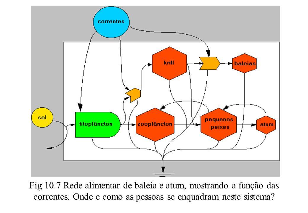 Fig 10.7 Rede alimentar de baleia e atum, mostrando a função das correntes. Onde e como as pessoas se enquadram neste sistema?