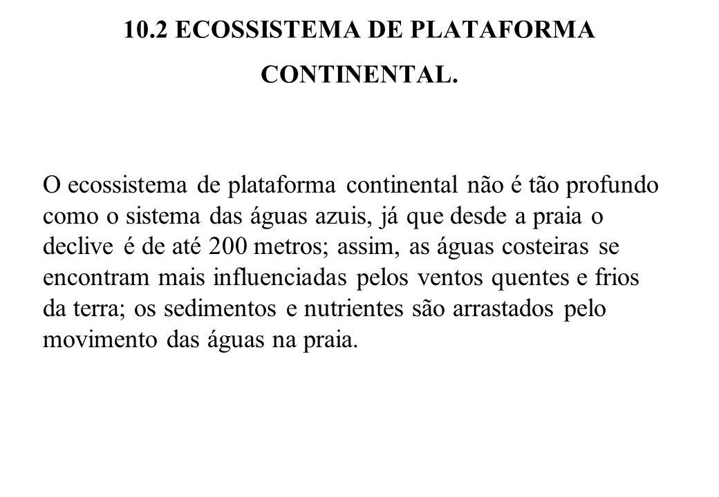 10.2 ECOSSISTEMA DE PLATAFORMA CONTINENTAL. O ecossistema de plataforma continental não é tão profundo como o sistema das águas azuis, já que desde a