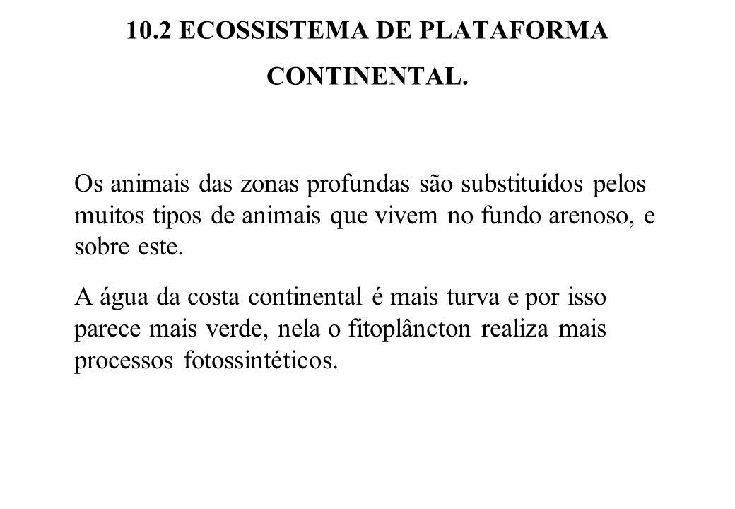 10.2 ECOSSISTEMA DE PLATAFORMA CONTINENTAL. Os animais das zonas profundas são substituídos pelos muitos tipos de animais que vivem no fundo arenoso,