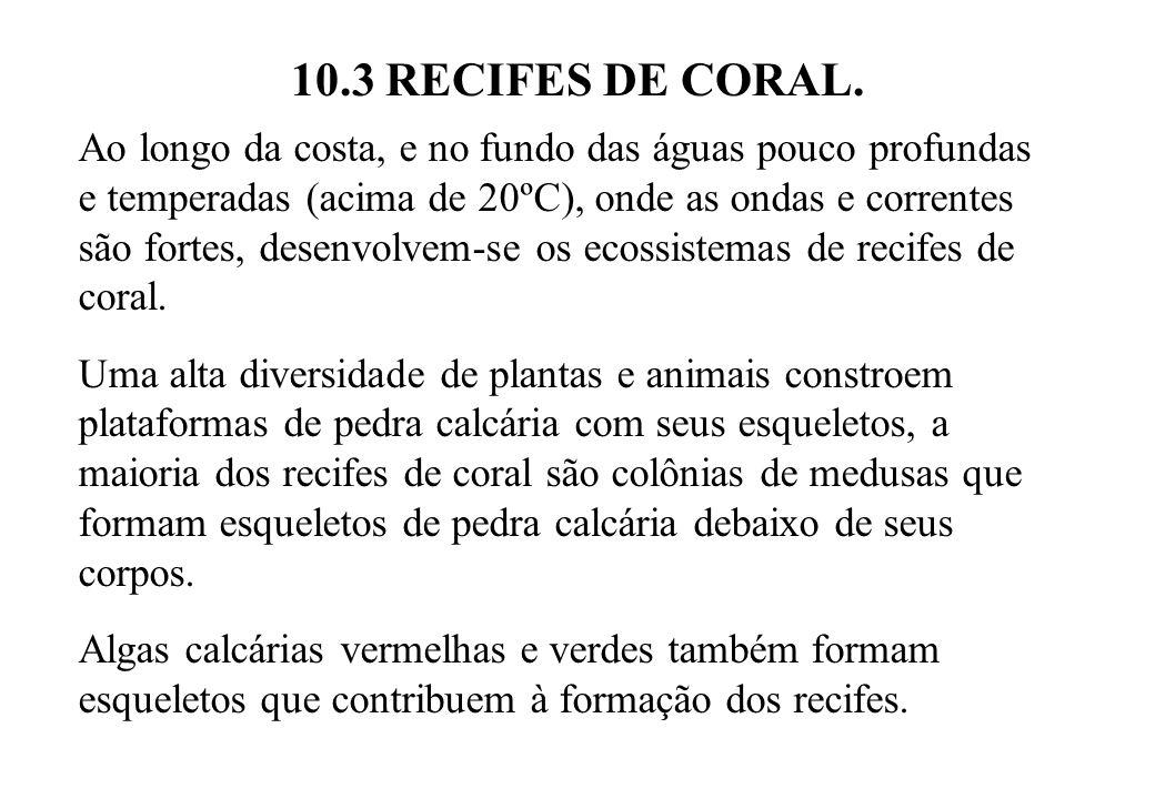 10.3 RECIFES DE CORAL. Ao longo da costa, e no fundo das águas pouco profundas e temperadas (acima de 20ºC), onde as ondas e correntes são fortes, des