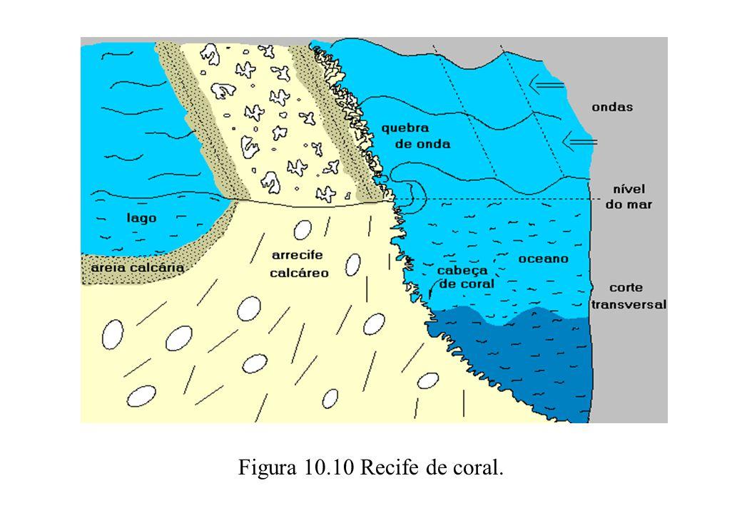 Figura 10.10 Recife de coral.