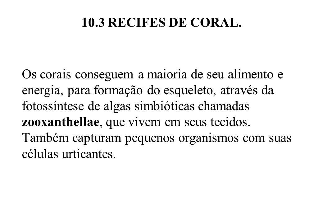 10.3 RECIFES DE CORAL. Os corais conseguem a maioria de seu alimento e energia, para formação do esqueleto, através da fotossíntese de algas simbiótic