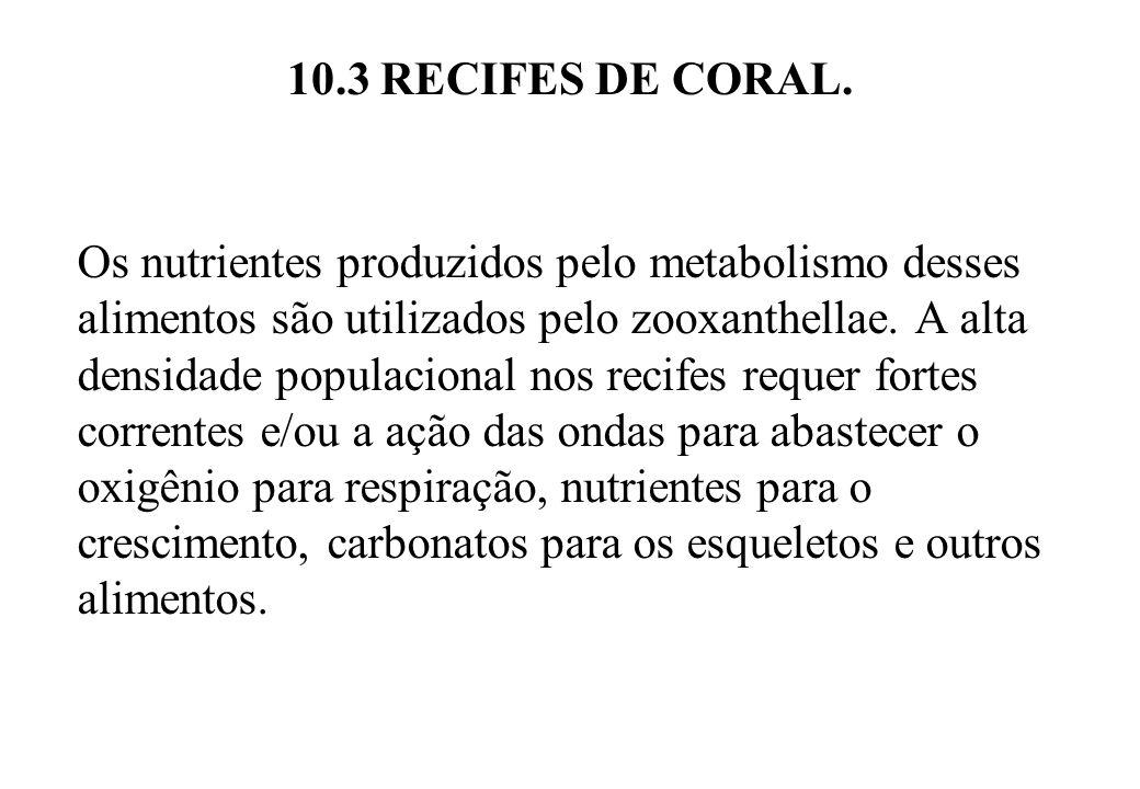 10.3 RECIFES DE CORAL. Os nutrientes produzidos pelo metabolismo desses alimentos são utilizados pelo zooxanthellae. A alta densidade populacional nos