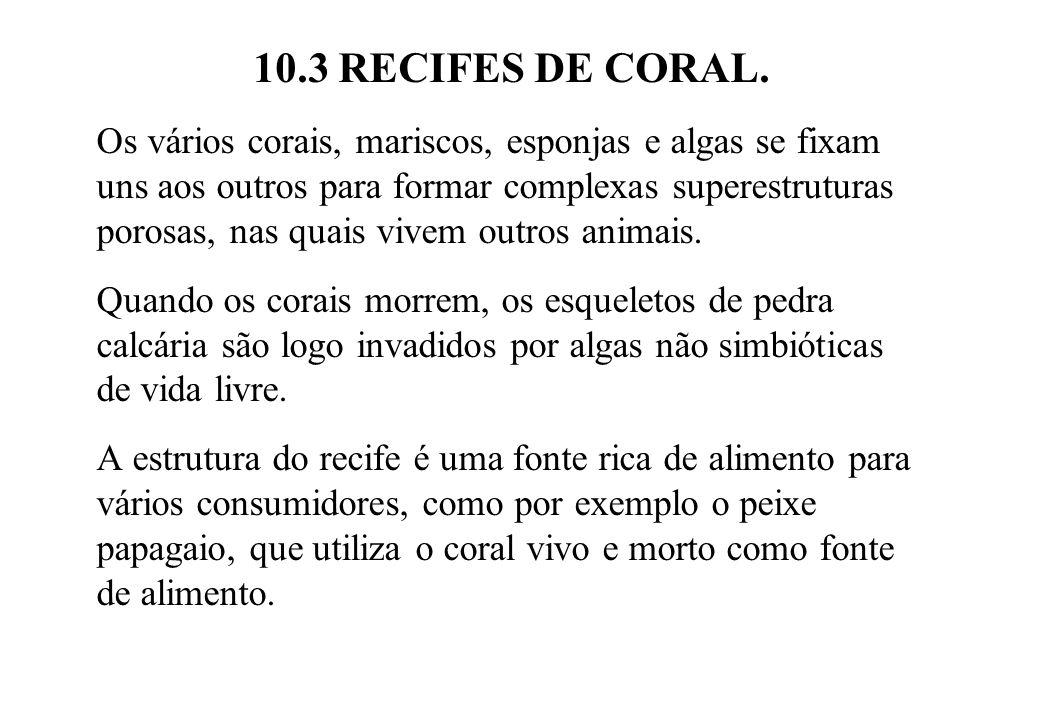 10.3 RECIFES DE CORAL. Os vários corais, mariscos, esponjas e algas se fixam uns aos outros para formar complexas superestruturas porosas, nas quais v