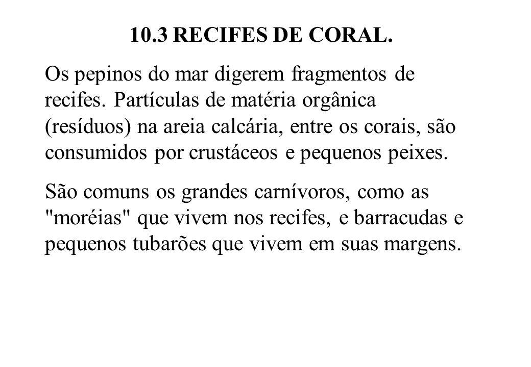 10.3 RECIFES DE CORAL. Os pepinos do mar digerem fragmentos de recifes. Partículas de matéria orgânica (resíduos) na areia calcária, entre os corais,