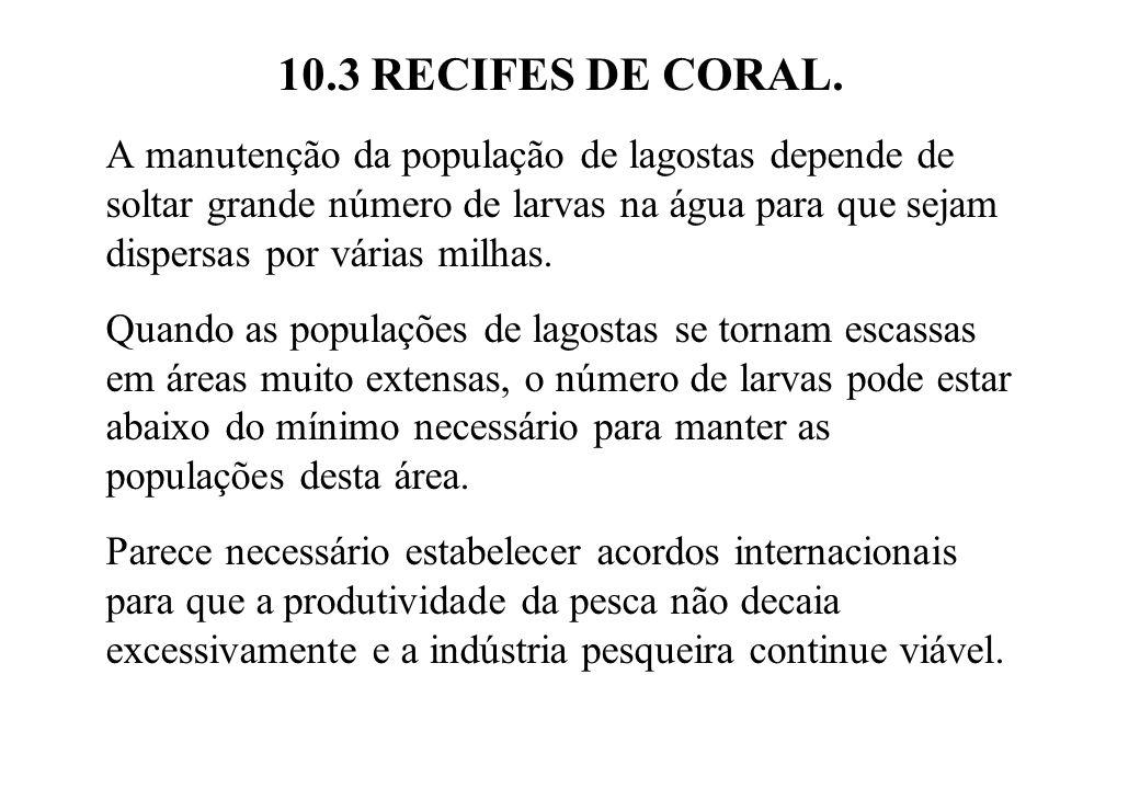 10.3 RECIFES DE CORAL. A manutenção da população de lagostas depende de soltar grande número de larvas na água para que sejam dispersas por várias mil