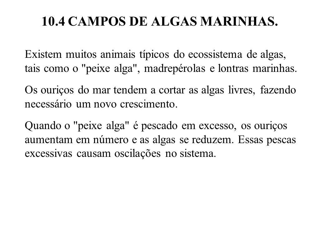 10.4 CAMPOS DE ALGAS MARINHAS. Existem muitos animais típicos do ecossistema de algas, tais como o