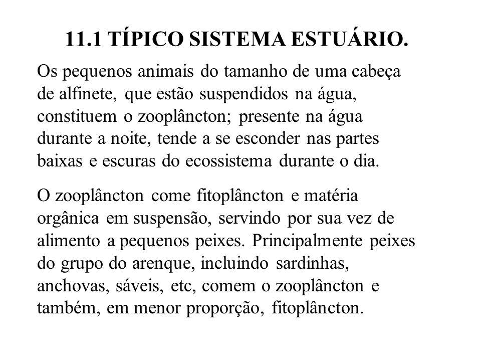 11.1 TÍPICO SISTEMA ESTUÁRIO. Os pequenos animais do tamanho de uma cabeça de alfinete, que estão suspendidos na água, constituem o zooplâncton; prese
