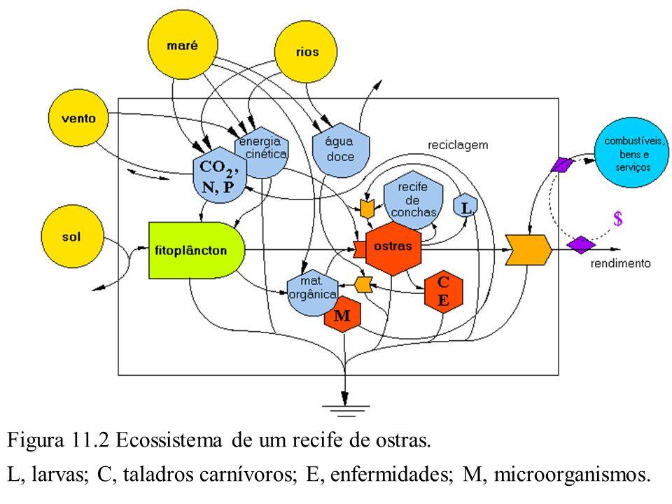Figura 11.2 Ecossistema de um recife de ostras. L, larvas; C, taladros carnívoros; E, enfermidades; M, microorganismos.