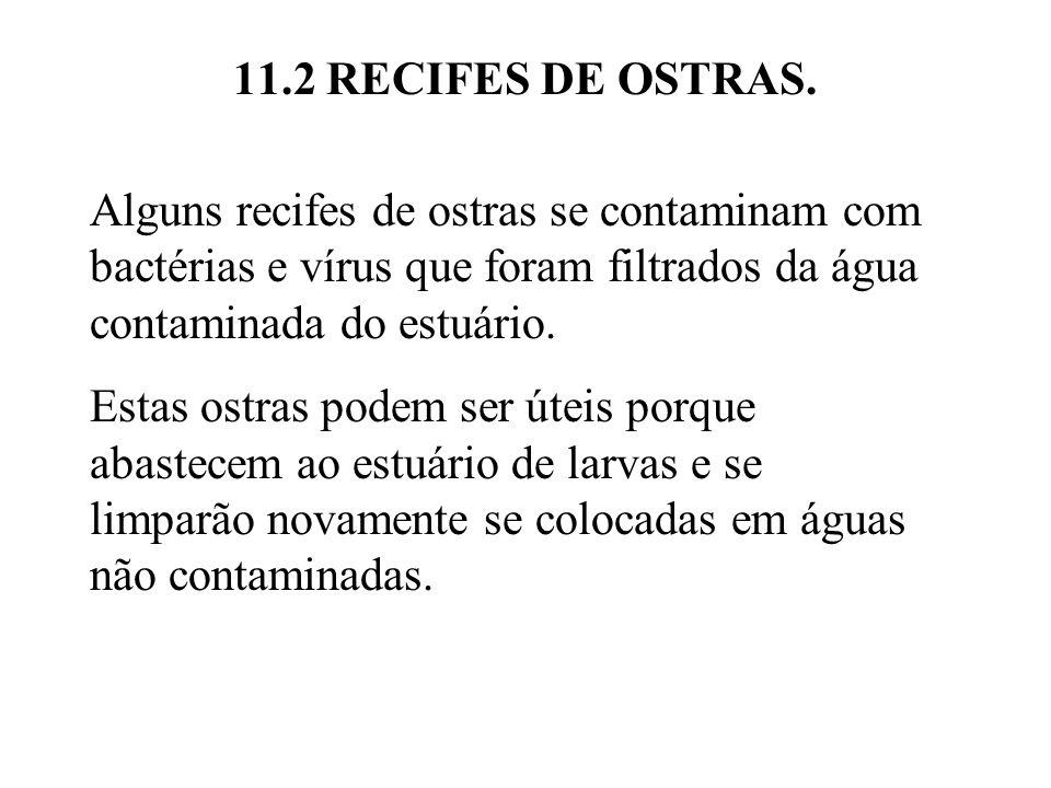 11.2 RECIFES DE OSTRAS. Alguns recifes de ostras se contaminam com bactérias e vírus que foram filtrados da água contaminada do estuário. Estas ostras