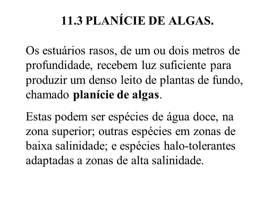11.3 PLANÍCIE DE ALGAS. Os estuários rasos, de um ou dois metros de profundidade, recebem luz suficiente para produzir um denso leito de plantas de fu
