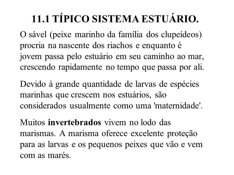 11.3 PLANÍCIE DE ALGAS.