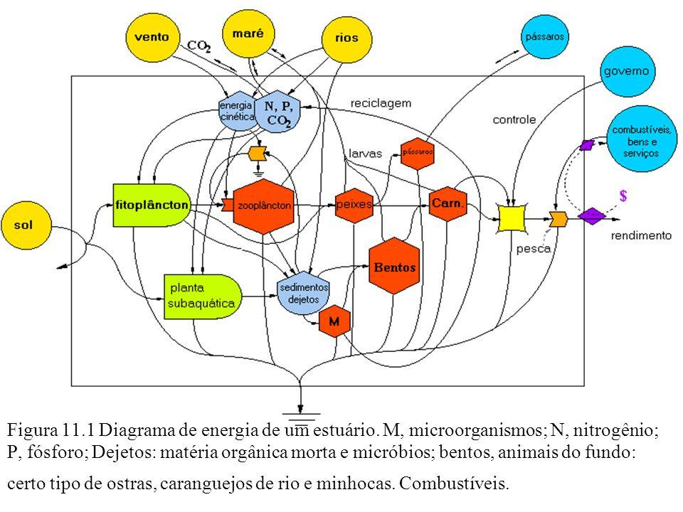 Figura 11.1 Diagrama de energia de um estuário. M, microorganismos; N, nitrogênio; P, fósforo; Dejetos: matéria orgânica morta e micróbios; bentos, an