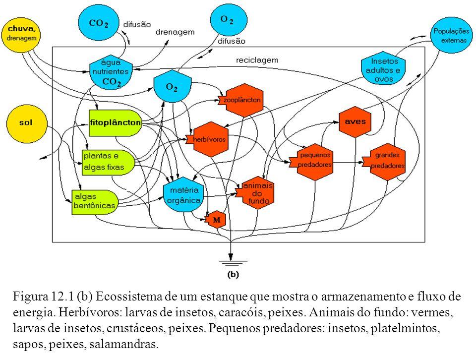 Figura 12.1 (b) Ecossistema de um estanque que mostra o armazenamento e fluxo de energia.
