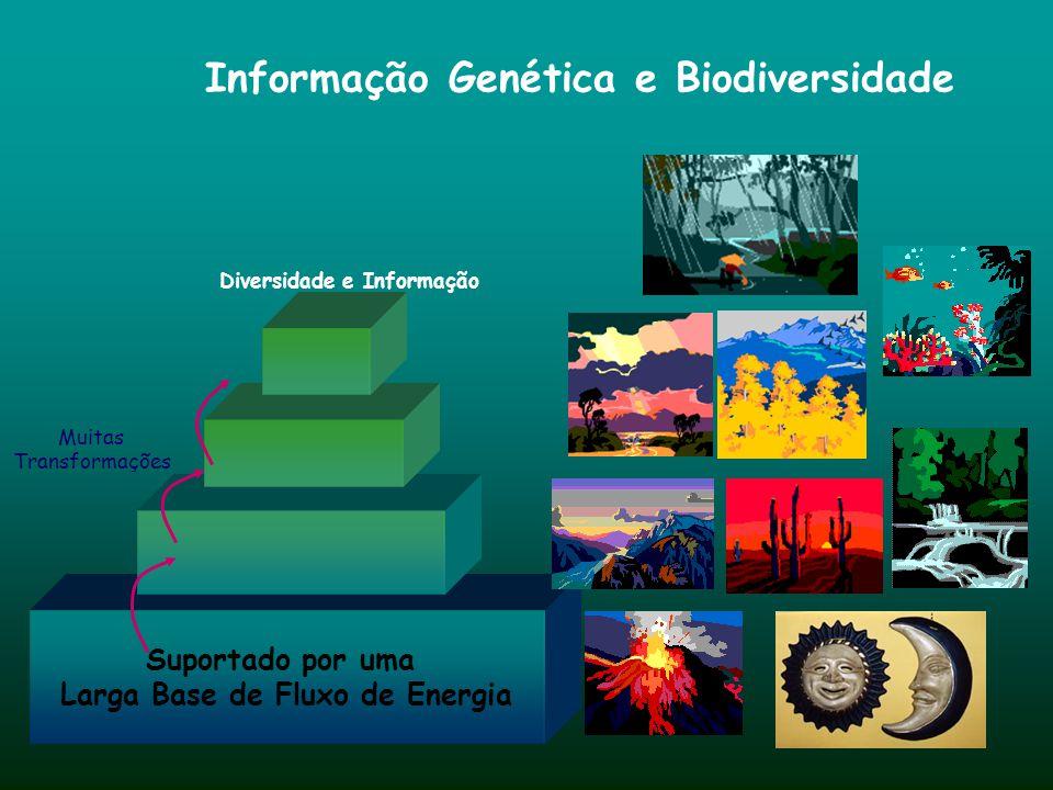 Fontes Base Ambiental População e a Economia Centros de Informação Surto de Informação ao Fim do Milênio Transmitindo Conhecimento Convergindo, Concen