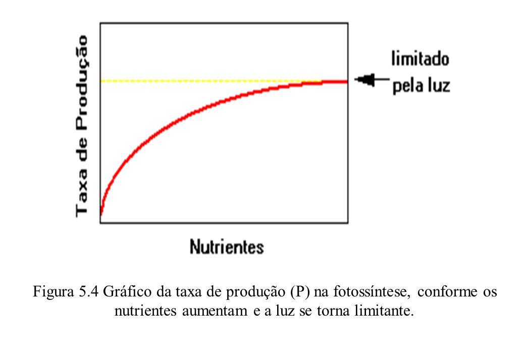 5.4 O PRINCÍPIO DA MÁXIMA POTÊNCIA.