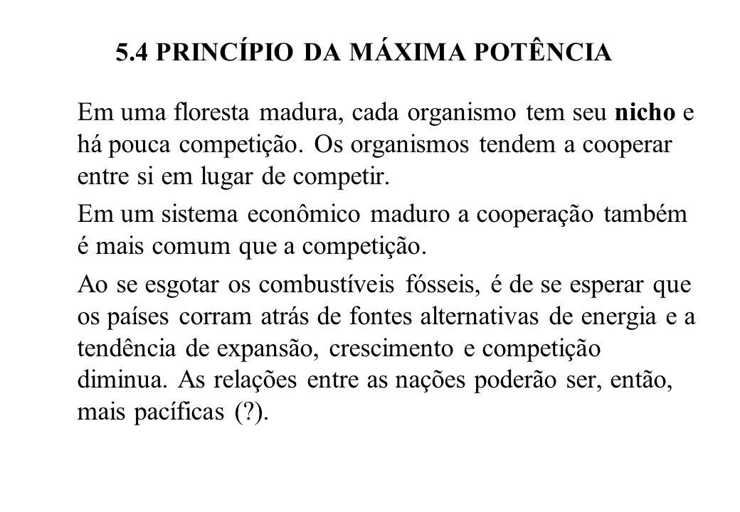 5.4 PRINCÍPIO DA MÁXIMA POTÊNCIA Em uma floresta madura, cada organismo tem seu nicho e há pouca competição.