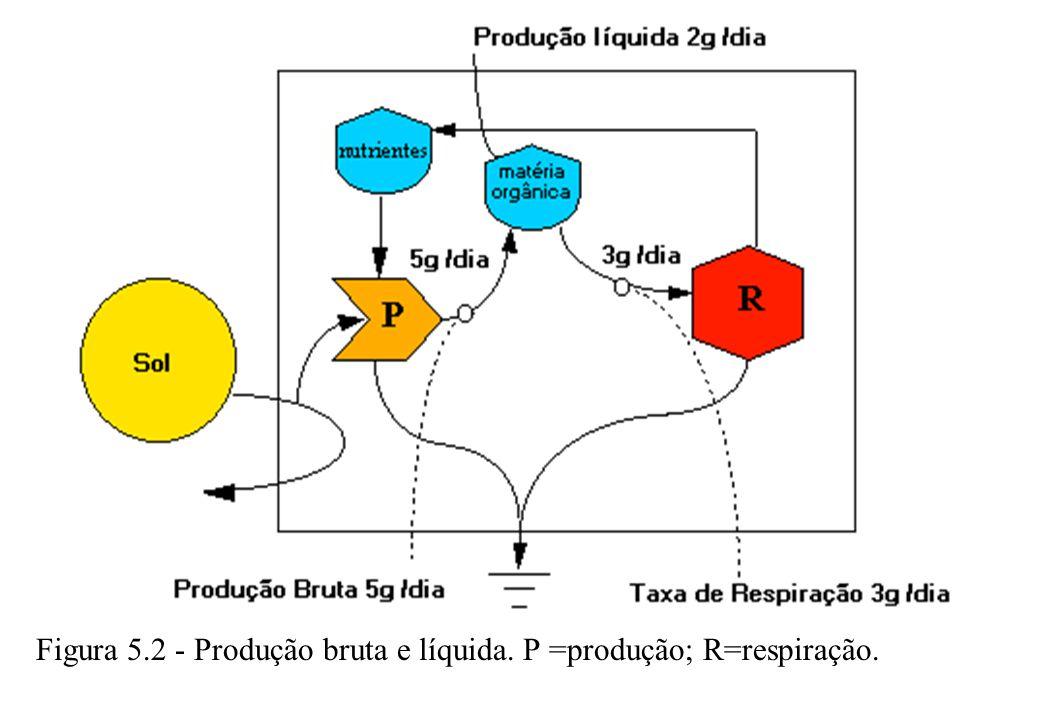 5.2 PRODUÇÃO LÍQUIDA E BRUTA Em sistemas complexos, como na floresta, onde existem várias etapas de produção e consumo, há mais de um tipo de produção líquida.