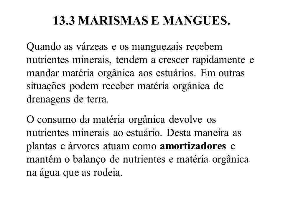 13.3 MARISMAS E MANGUES.