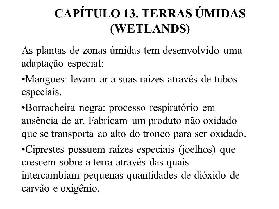 CAPÍTULO 13.